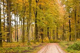 forest-453774__180